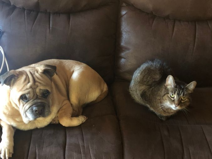 Lindsay's pug/shar-pei mix Bella and cat Billie sitting next to each other on a couch