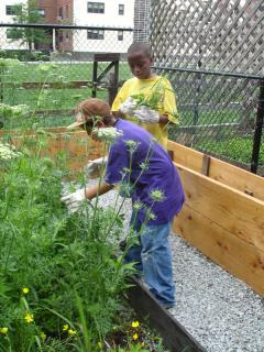 kids gardening in a Madison grant supported garden