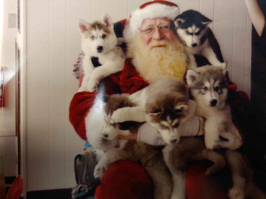 John dressed as Santa with 3 huskies