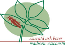 City of Madison Emerald Ash Borer