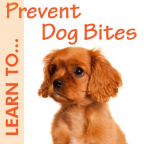 Learn to Prevent Dog Bites