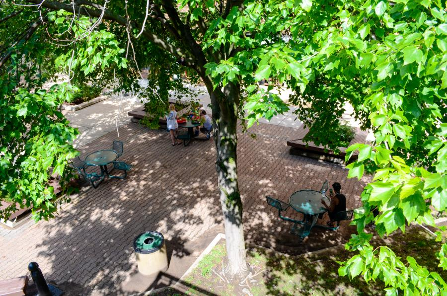 trees in courtyard,  photo credit: City of Madison