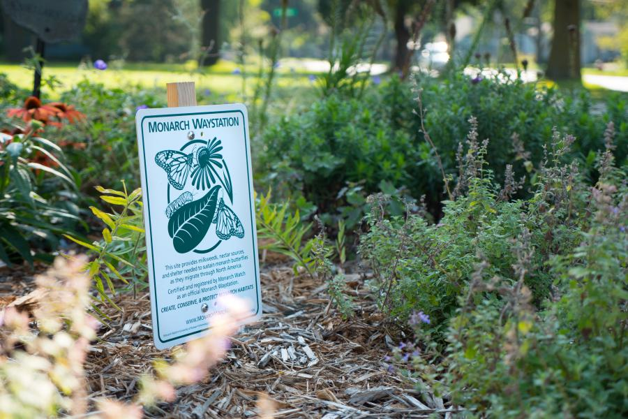 Monarch Waystation - This pollinator garden was donated and installed by the Sunset Garden Club in 2017.