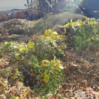 Curbside yard waste has ended for the spring. Please take material to a drop-off site.