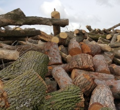 Pile of logs to be processed at Brush Processing Center