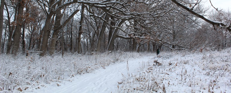 edna taylor conservation park, snow covered trail