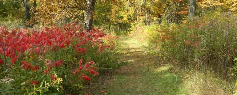 edna taylor path