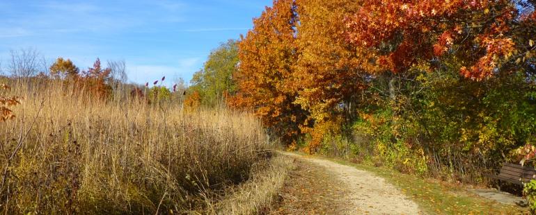 fall at owen by Brian Shore