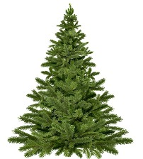Curbside Christmas tree collection begins January 2, 2020