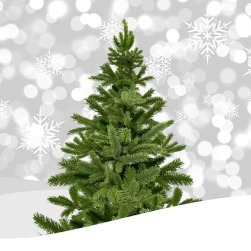 Tree collection begins on January 2, 2019.