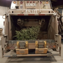 Tree collection over for 2018. Take trees to drop-off site