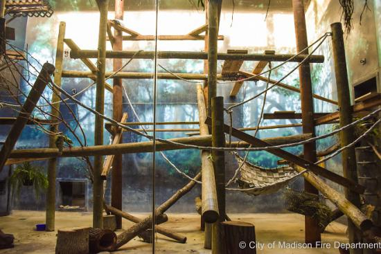 Lemur and Horax exhibit with hoses