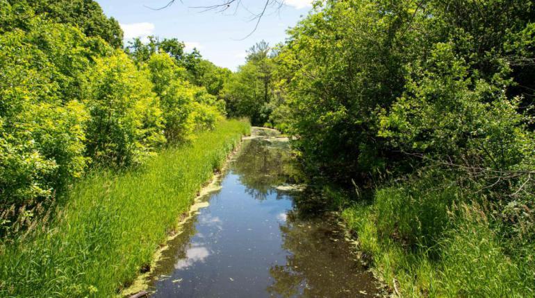 parkland - trees, grass, waterway