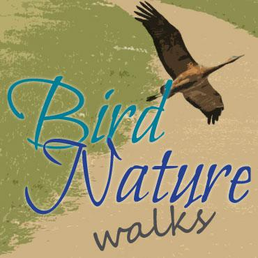 Bird and Nature Walks