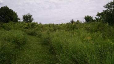 meadow in meadow ridge conservation park