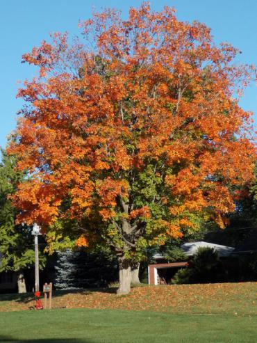 fall at odana