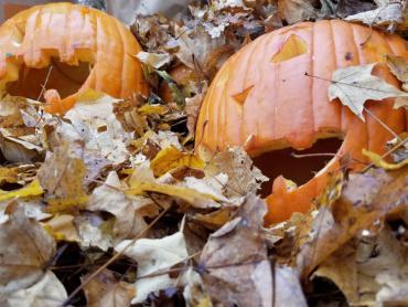 Good example of pumpkin in leaf pile