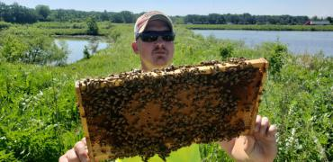 Engineering Operations Worker Todd Chojnowski holds up a frame of bees.