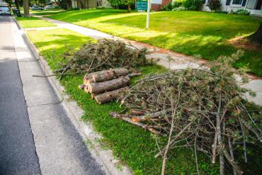 A tidy brush pile at the curb waiting for collection during pickup season. This brush should go to a drop-off site now instead of at the curb.