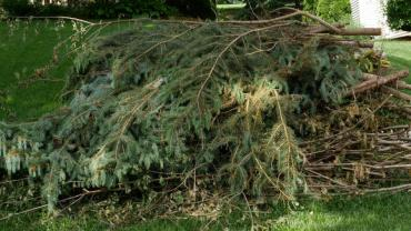 A tidy pile of brush with cut ends all facing in the same direction & ready for pickup