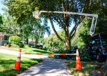 Forestry crews pruning a tree