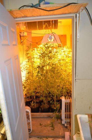basement grow room design. Basement Grow Operation Room Design