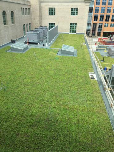 """The Madison Municipal Building has a green roof, which is a living roof that is partially or completely covered with vegetation and a growing medium. The green roof was brought to site on trays, the trays were installed in a grid, resulting in a green """"carpeted"""" roof."""