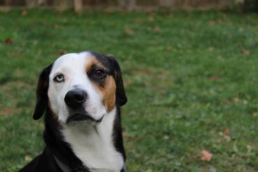 josh's dog