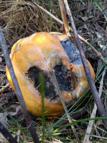 Rotting Pumpkin in City Greenway