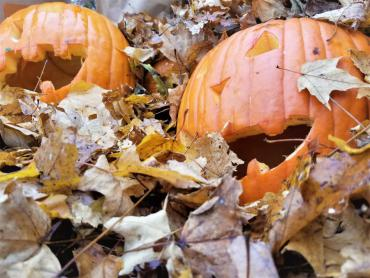 Jack-o-lanterns in a leaf pile