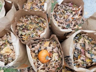Pumpkin in a bag of leaves