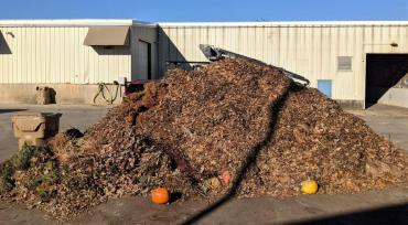 Medium-sized pile of yard waste at the drop-off site - and you should take yard waste to a drop-off site now, too.