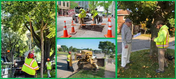 Collage of Forestry Services: pruning, stump removal, tree planting, and tree specialist consultation